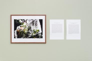Daniel Hansen / The history of botany